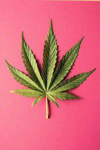 cannabisleaf