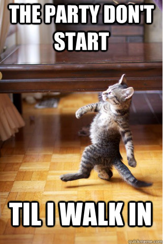 extrovert cat
